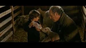 child feeds lamb